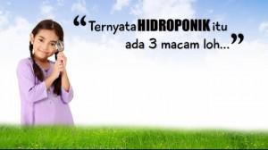 hidroponik-after